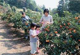 桜山観光みかん園4