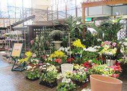 花の交流館