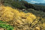 桜山公園1