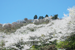 桜山公園2