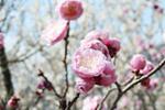 桜山公園6