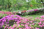 桜山公園8