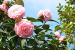 桜山公園9